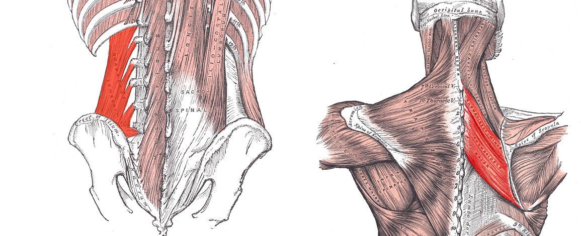 muskler som arbetar automatiskt